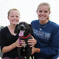Adopt A Pet :: Tango - Elyria, OH