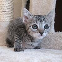 Adopt A Pet :: Buccaneer - San Bernardino, CA