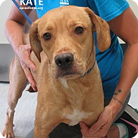 Adopt A Pet :: Kate - Elizabeth City, NC