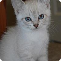 Adopt A Pet :: Ae Litter - Jade - Williamston, MI