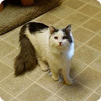 Adopt A Pet :: Timmy - Salem, WV