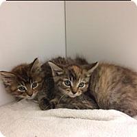 Adopt A Pet :: Snaps - Herndon, VA