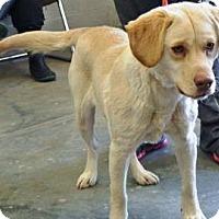 Adopt A Pet :: Josie - Albert Lea, MN