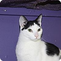 Adopt A Pet :: Stanley (LE) - Little Falls, NJ