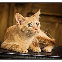 Adopt A Pet :: Ravioli - Owensboro, KY