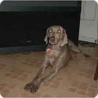 Adopt A Pet :: Lea - Attica, NY
