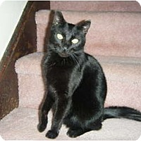 Adopt A Pet :: Oliver Twist - Warminster, PA