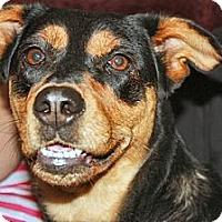 Adopt A Pet :: Hera - Hamilton, ON
