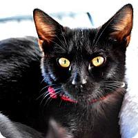 Adopt A Pet :: Paris - Temecula, CA