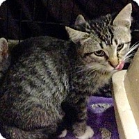 Adopt A Pet :: Carmine - East Brunswick, NJ