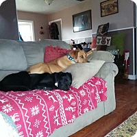 Adopt A Pet :: Mac-Daddy & Sugar - Lewisville, IN