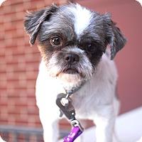 Adopt A Pet :: Gillian-Adopted! - Detroit, MI