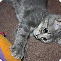 Adopt A Pet :: Cliff (LE) - Little Falls, NJ