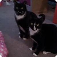 Adopt A Pet :: Socks&SneakersCP - Carlisle, PA