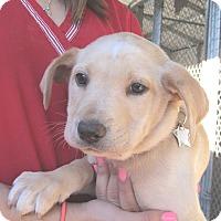 Adopt A Pet :: McCoy - Wharton, TX