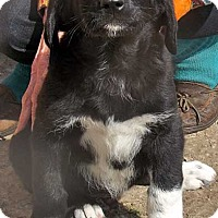 Adopt A Pet :: Joe in NY - new pup! - Beacon, NY