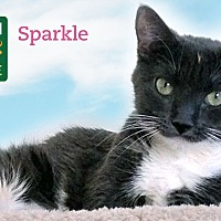 Adopt A Pet :: Sparkle - Oakville, ON