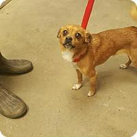Adopt A Pet :: Blue - Camden, DE