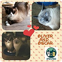 Adopt A Pet :: Oliver and Oscar - Denver, CO