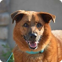 Adopt A Pet :: Ace - Downey, CA
