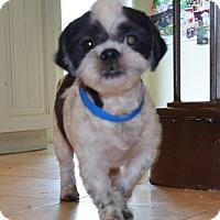 Adopt A Pet :: Yale Barkley - Urbana, OH