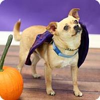 Adopt A Pet :: Chico - Philadelphia, PA