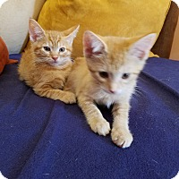 Adopt A Pet :: Sophie & Sadie - Whitehall, PA