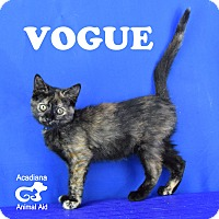 Adopt A Pet :: Vogue - Carencro, LA