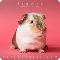 Adopt A Pet :: Olaf - Sheboygan, WI