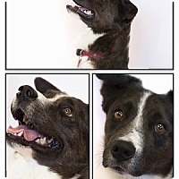 Adopt A Pet :: Bond - Buena Vista, CO