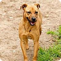Adopt A Pet :: Luz - Conway, SC