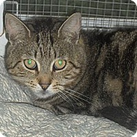 Adopt A Pet :: Evan - Middletown, CT