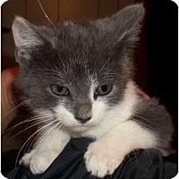 Adopt A Pet :: Reganold - Acme, PA