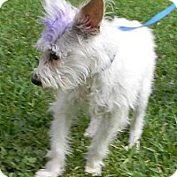 Adopt A Pet :: Tinkerbell - aka TINK - Missouri City, TX