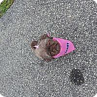 Adopt A Pet :: Jamaica - Charlotte, NC