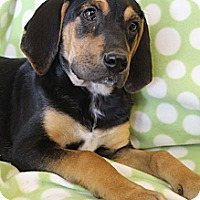 Adopt A Pet :: Annie - Hagerstown, MD