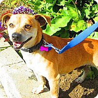 Adopt A Pet :: Chewy - Culver City, CA