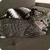 Adopt A Pet :: Sanri - Davis, CA