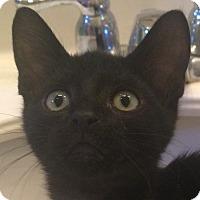 Adopt A Pet :: Diablo - Winchester, CA