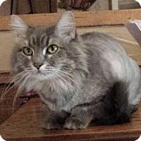 Adopt A Pet :: Sassafrass - Ennis, TX