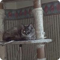 Adopt A Pet :: Mindy - Saint Albans, WV