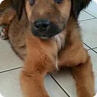 Adopt A Pet :: Diego - Marlton, NJ