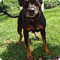 Adopt A Pet :: Coral - Miami, FL