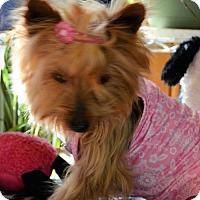 Adopt A Pet :: Lucy - Crook, CO