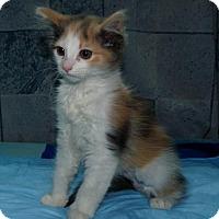 Adopt A Pet :: Edna - San Jose, CA