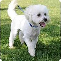 Adopt A Pet :: Tyler - Roseville, CA