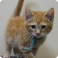 Adopt A Pet :: Howie - Gary, IN
