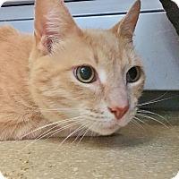 Adopt A Pet :: Lieutenant Dan - Salisbury, MA