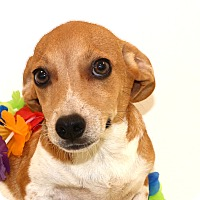 Adopt A Pet :: Chimeco~ meet me! - Glastonbury, CT