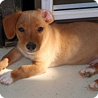 Adopt A Pet :: Flip - Towson, MD